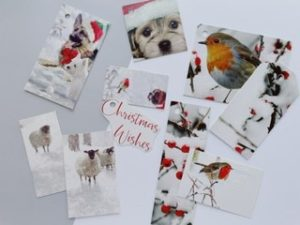Woodland style featuring robins, sheep and dogs. The dogs are in Santa hats. Lots of trees with berries and snowy scenes.