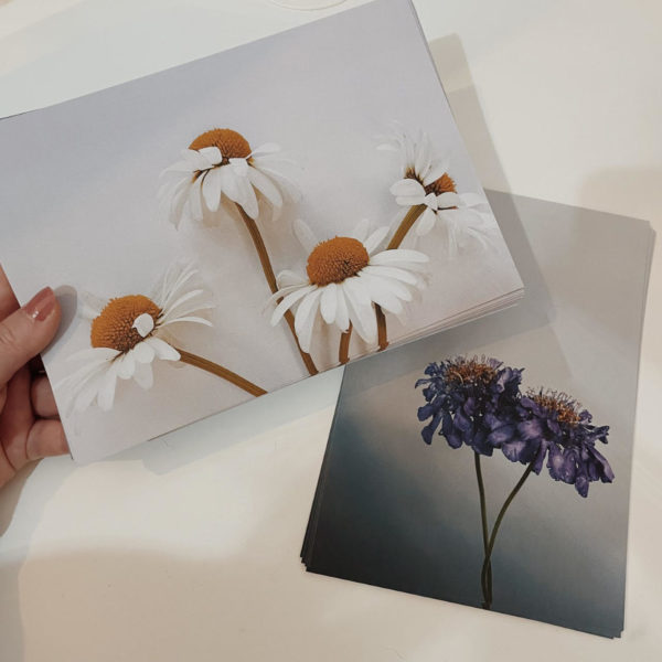 Hand holding an a5 print of 4 wildflower daisies with a second wildflower print on the white table below
